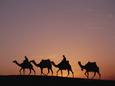gerry-ellis-egyptians-riding-camels-across-desert-near-the-pyramids-of-giza-at-sunset-cairo-egypt