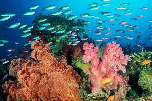 Coral landscape with soft corals and fish, Fiji