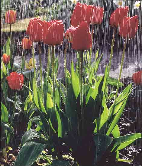 april_showers_john_doyle_470