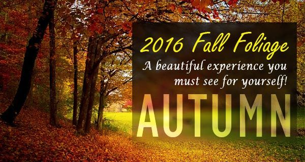 fall-foliage-2016